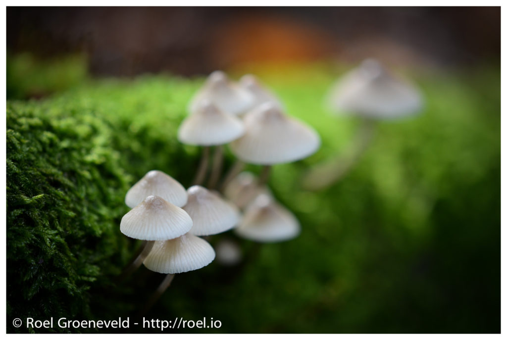 Foto van paddestoelen in het bos