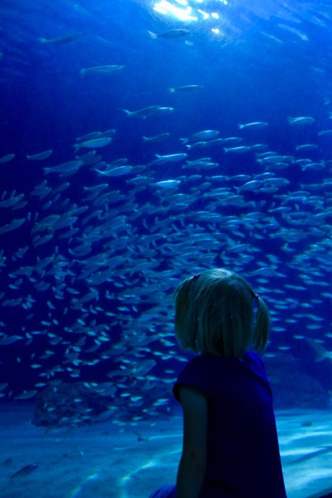 Photo of fish in water and a girl in the foreground